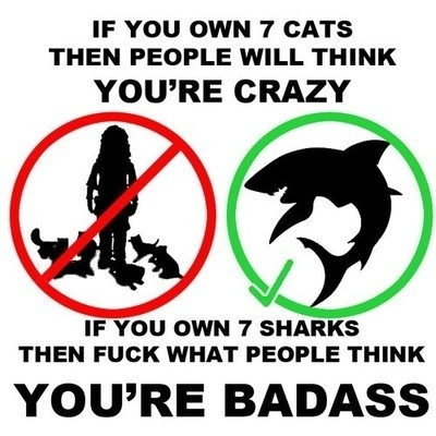 7 Cats vs. 7 Sharks