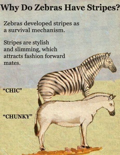 Why Do Zebras Have Stripes?