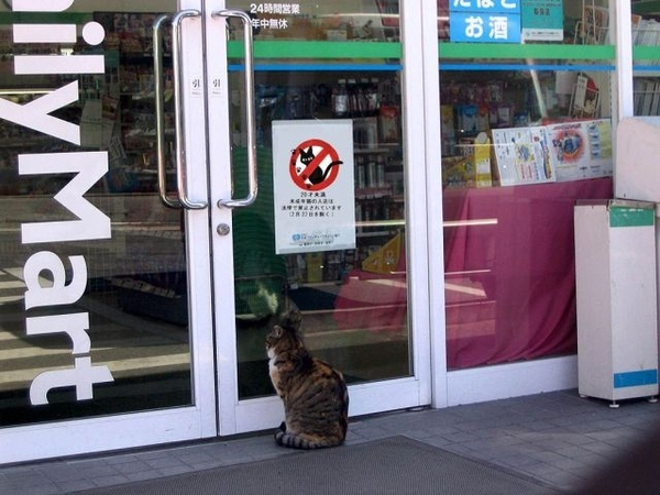 Cat Banned