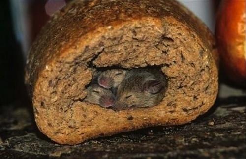 Mouse-Hole Wheat