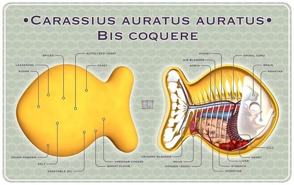 Goldfish Cracker Anatomy