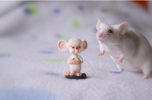 Real Life Pinky And The Brain
