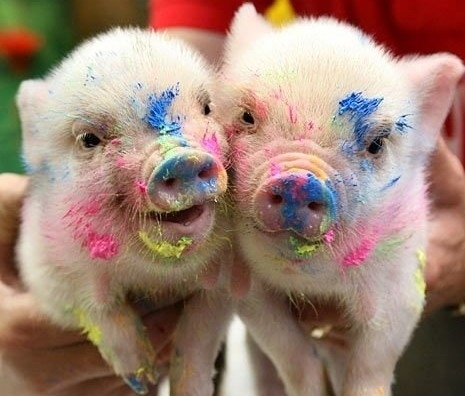 Painted Piglets