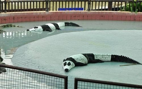 Pandagators