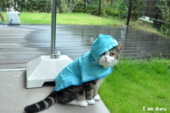 Maru In A Raincoat