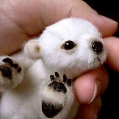 The Tiniest Polar Bear