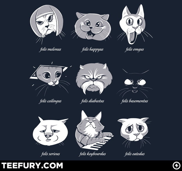 Types Of Internet Cats