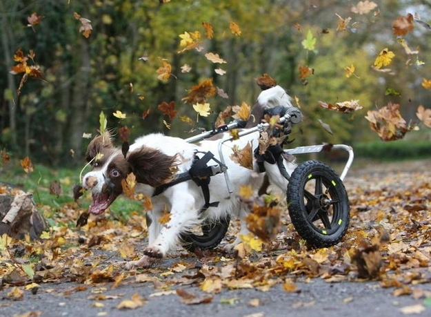 Disabled Doggie Loves Leaves