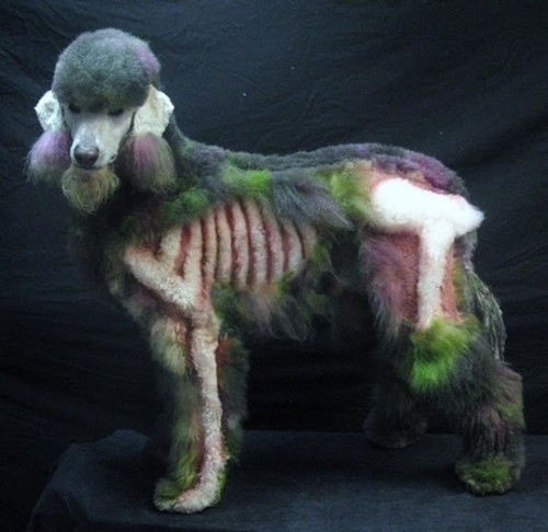 Zombie Poodle Is Amazing