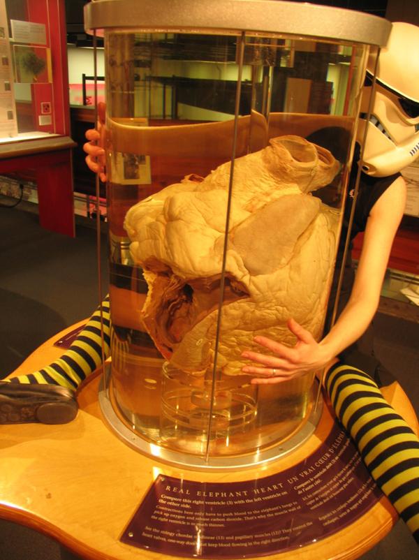 Lady Stormtrooper Hugs An Elephant Heart