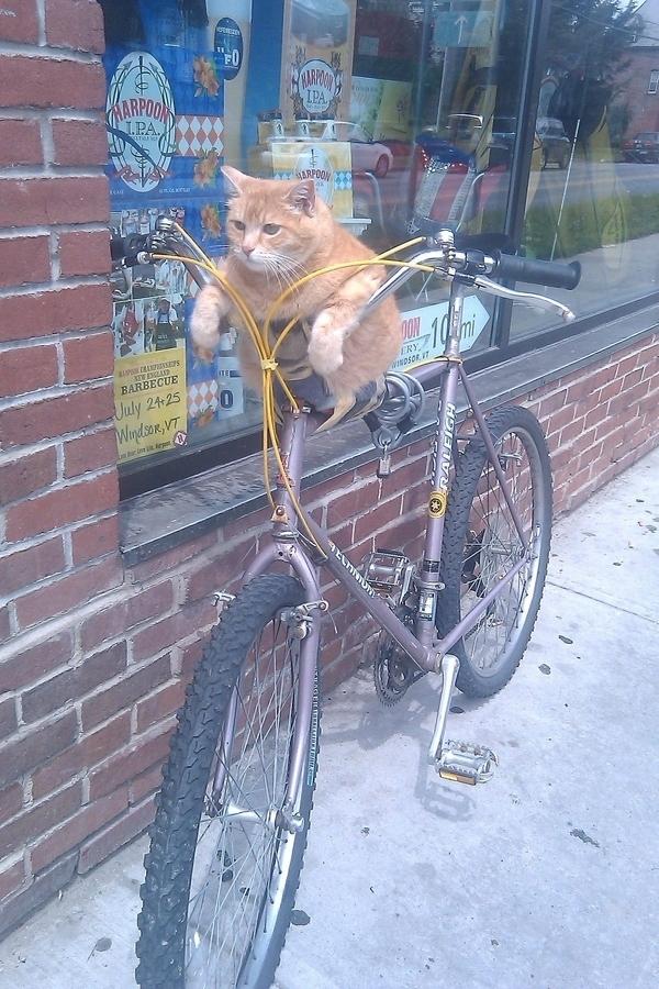 Bike Cat