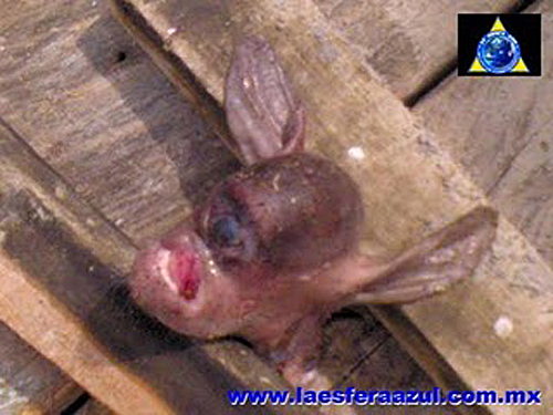 Chupacabra Killed In Mexico