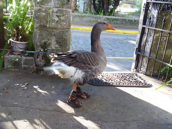 The Latest In Urban Avian Footwear
