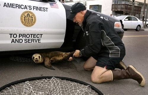 Seal Resists Arrest