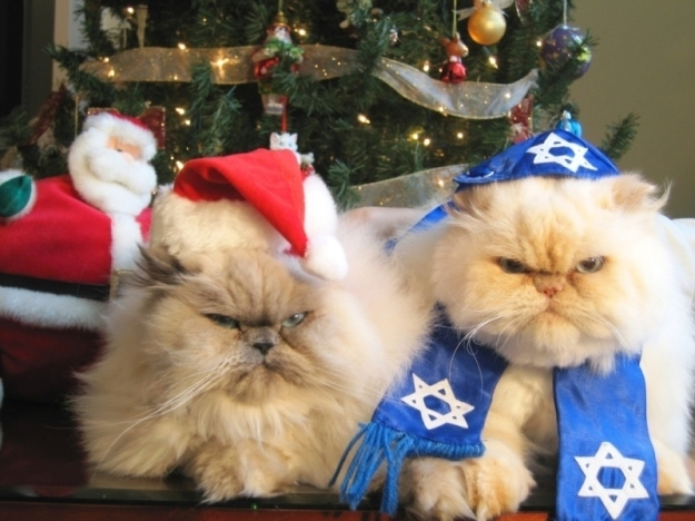 Happy Holidays from the Interfaith Felines