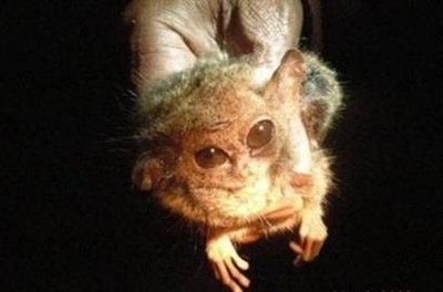 Weird Furby Creature NOT Extinct!