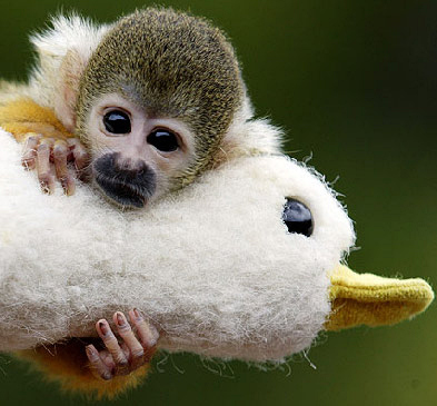 43 Monkey Photos That Will Change Your Life