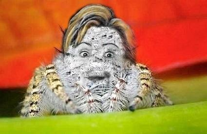 Hillary Spider
