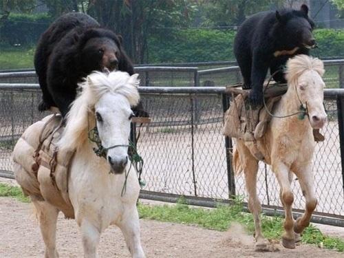 Riding Bear Back
