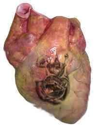 Body Organ Tattoos