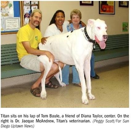 New Worlds Tallest Dog