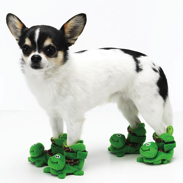 Dog Wearing Turtle Slippers