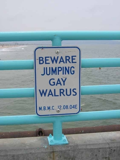 Beware Of The Gay Walrus
