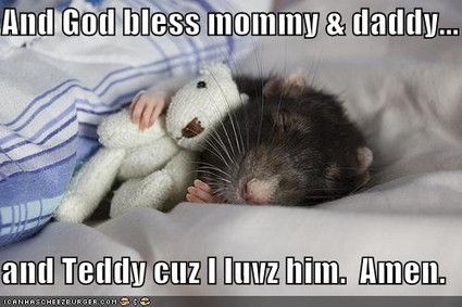 Because rat and teddy deserved a lolz.  The end.