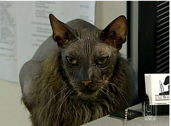 Ugly, Ugly Cat