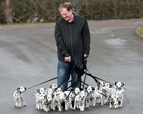 18 Dalmatian Puppies