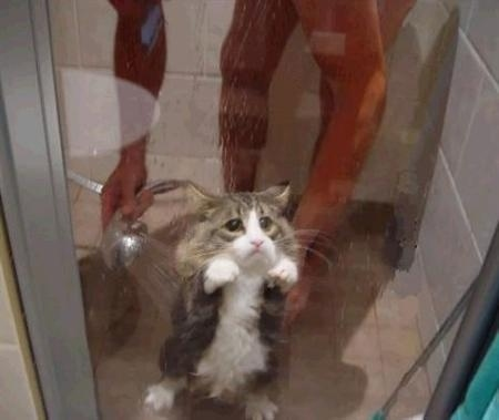 Shower Cat