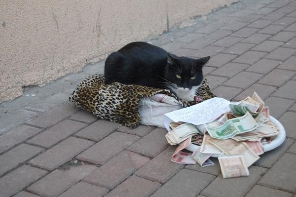 Panhandling Cat