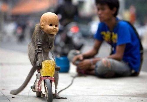 Baby Skull Monkey