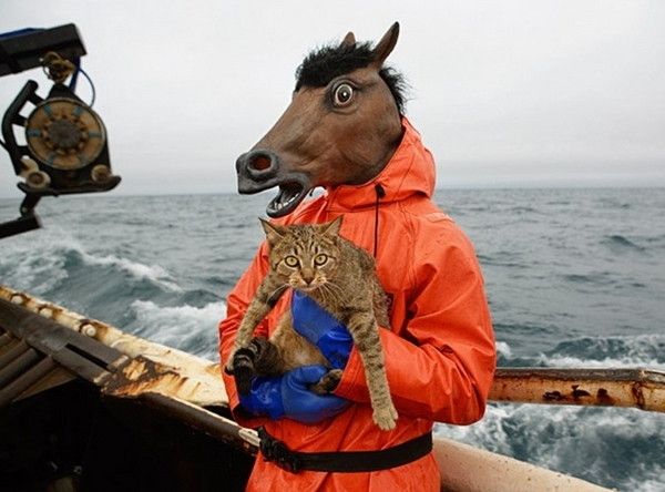 Horse With Cat On Boat in Storm
