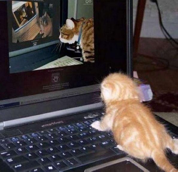 Meta Cats