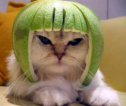 Whoa! Lime + Cat = Limecat!