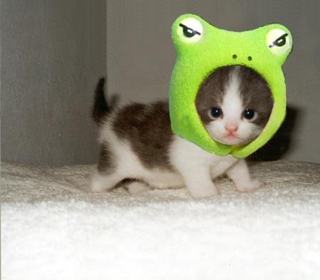 Cutest Kitten Hat Ever