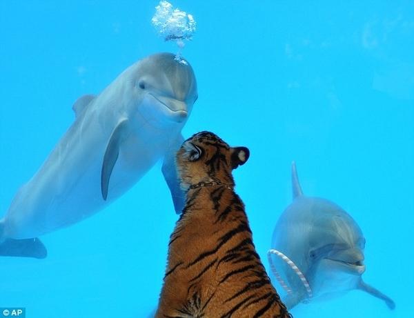 Tiger + Dolphin = BFF?