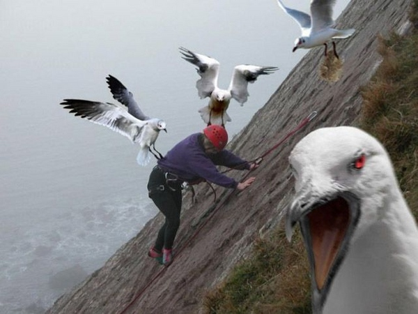 When Seagulls Attack