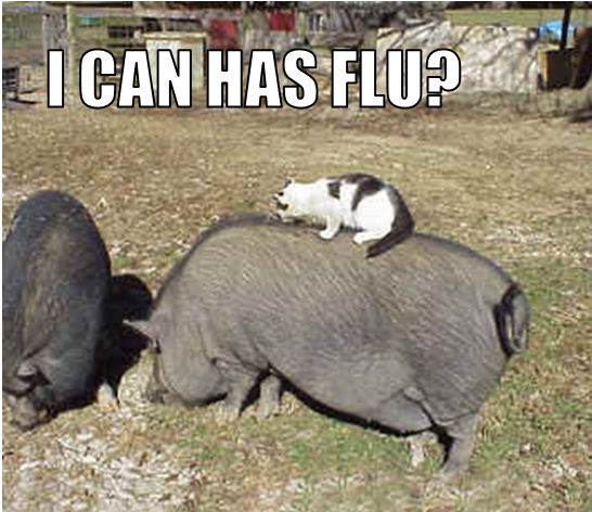 Kitty Tries to End It a La Swine