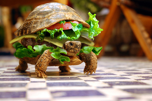 The Turtle Burger