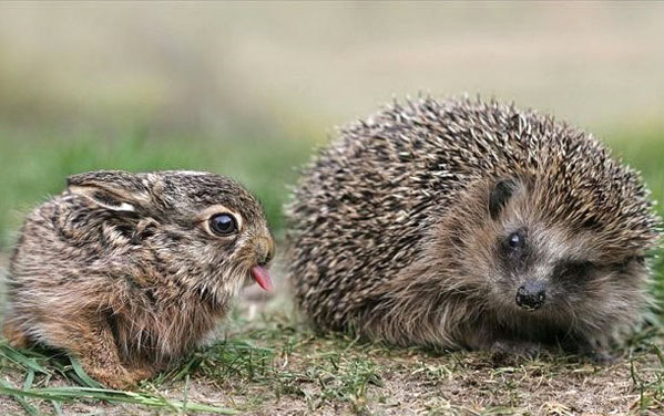 Hedgehog Doesn't Trust Bunny