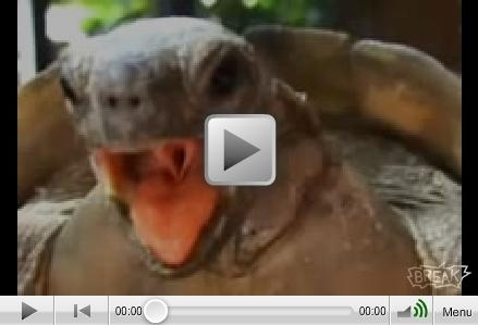 The North American Humping Tortoise