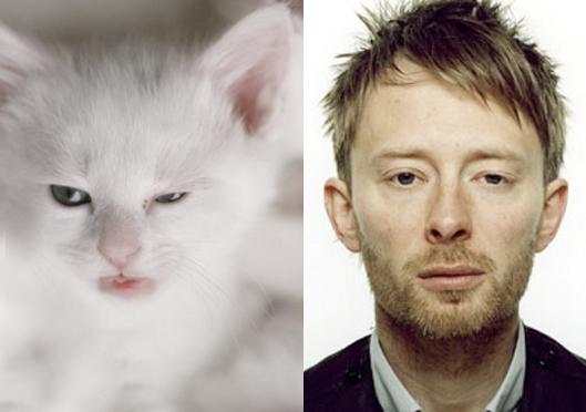 Celebrity Look-alike Cat