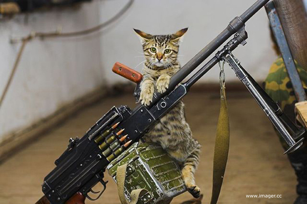 Cats Are Ready for Anything