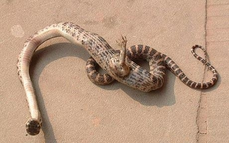 Snake With Foot Found!