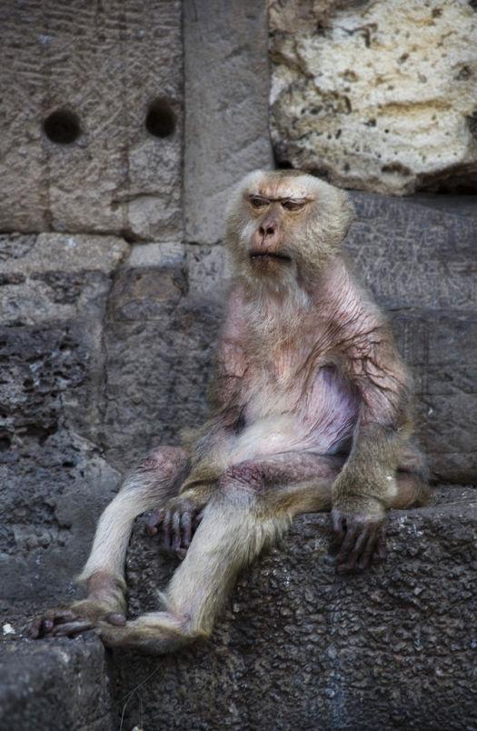 Monkey Not Impressed