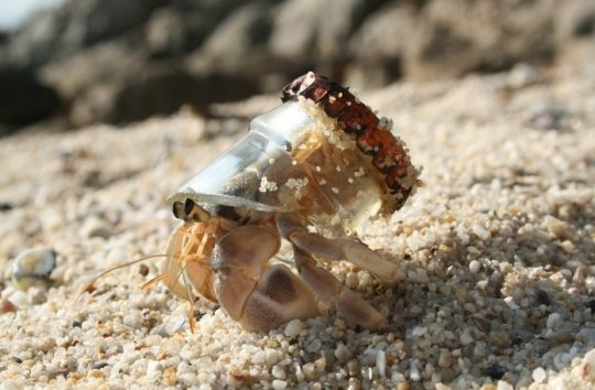 Recycling Crab