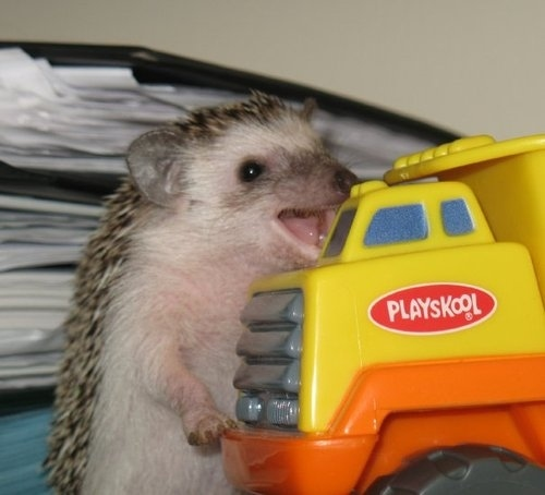 Happy Hedgehog Is Happy