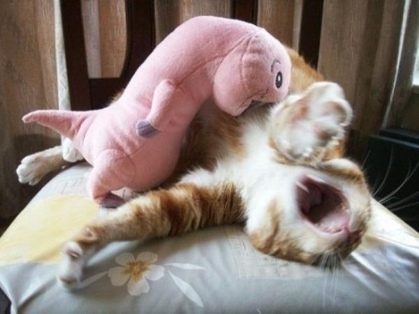 Rufus Attacks Kitty
